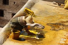 Dyeing Goat Skins. A young man dyeing goat skins yellow at the tannery in Fez, Morocco stock images