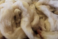 Dyeing sheep wool Stock Image