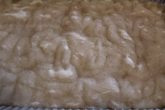 Dyeing sheep wool roving. Acid presoak for dyeing American Tunis sheep wool roving Royalty Free Stock Photography