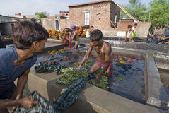 dyers印地安人工作 免版税库存照片