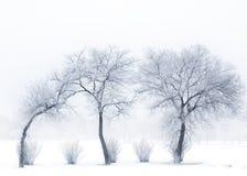 Dygotliwi drzewa Zdjęcie Stock