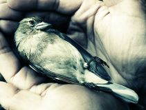 Dying bird in hands. Acidic style Royalty Free Stock Photography
