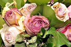 Dying Bouquet Of Roses. A bouquet arrangement of pink and white dying rose cuttings Royalty Free Stock Image