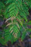 Dying brown fern leaves. Close up view of dying brown fern leaves stock photo