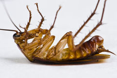 Dying cockroach Stock Photos