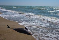 Dying dolphin on a sea beach