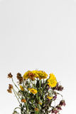 Dying flowers. On a white vertical background Royalty Free Stock Photography