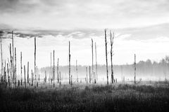 Dying forest Royalty Free Stock Photography