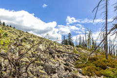 Dying forests Royalty Free Stock Photography