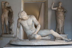 Dying Gaul Stock Images
