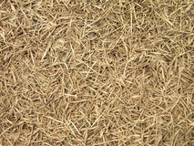 Dying Grass background. Dying brown Grass background texture Stock Photo
