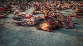 Dying Leaves. Love the trees until their leaves fall off Stock Image