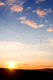 Dying light of the sun - migrating birds Royalty Free Stock Images