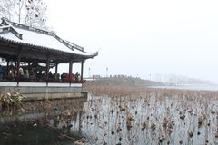 Dying lotuses in the West Lake(xihu) in Hangzhou of China in winter after the snow Stock Image