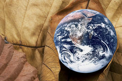 Dying Planet Earth. Image of planet earth with dried bamboo leaves portraying a dying earth Royalty Free Stock Photos