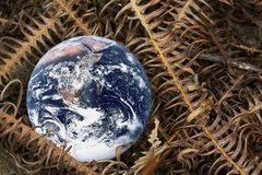 Dying Planet Earth. Image of planet earth with dried fern leaves portraying a dying earth Royalty Free Stock Photography