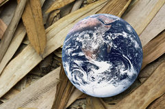 Dying Planet Earth. Image of planet earth with dried bamboo leaves portraying a dying earth Royalty Free Stock Image