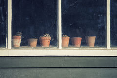 Dying plants on pots in window of old vintage retro potting shed Royalty Free Stock Image