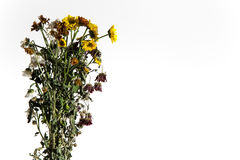 Dying plants on a white background. On the left Stock Photo