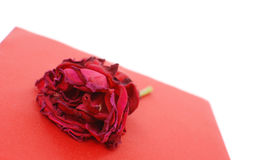 Dying Rose. Rose Beginning To Wilt On Top Of Red Box Stock Photography