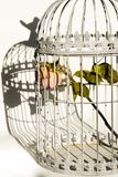 Rose in birds cage. Dying rose in birds cage Royalty Free Stock Photography