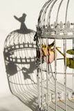 Rose in birds cage. Dying rose in birds cage Royalty Free Stock Image