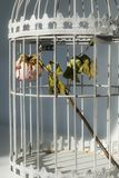 Rose in birds cage. Dying rose in birds cage Stock Photos