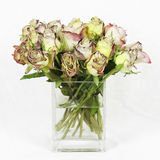 Dying Roses. An arrangement of dying Roses in a glass Vase Stock Image
