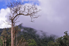 Dying tree in highland Royalty Free Stock Images