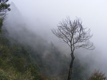 The single dying tree. Tree without leaves in a foggy december evening on the top of the hill.Picture taken from Munnar hill station,Kerala,India Royalty Free Stock Photography