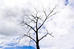 Dying Tree silhouette Stock Image