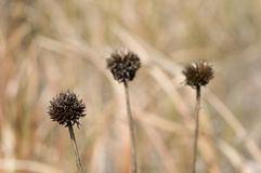 Dying Weeds Royalty Free Stock Images