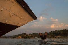 Dyk huvud först, sjö Kivu, Kibuye, Rwanda arkivbilder