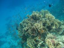 dyka hud för rött hav Royaltyfri Bild