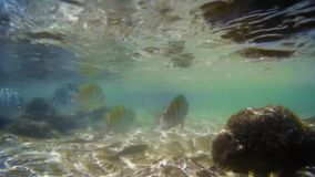Dyka i den naturliga tipsen med en enorm variation av färgrika fiskar arkivfilmer