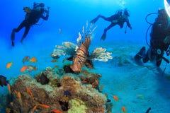 Dyka i det röda havet Royaltyfri Foto