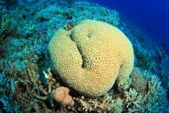 Dyka i det röda havet Arkivfoto