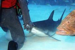 dyka matning Royaltyfri Fotografi
