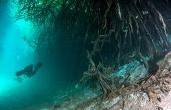 Dykapparatdykning i casaen Cenote i Mexico arkivfoto