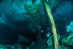 Dykapparatdykning i Cenoten Dos Ojos, Mexico fotografering för bildbyråer