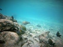 Dykapparatdykning i Maldiverna arkivbilder