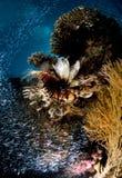 Dykapparatdykning, lejonfisk, korallrev, fisk, marin- liv Royaltyfria Foton