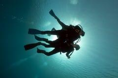 Dykare i Röda havet. Arkivbild