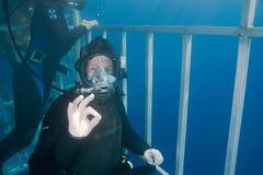 Dykare i sharkcage royaltyfri foto