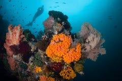 Dykare och djupa Coral Reef i Indonesien fotografering för bildbyråer