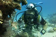 Dykare och fisk i Röda havet royaltyfri fotografi