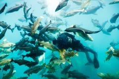 Dykare och fiskar Arkivfoton