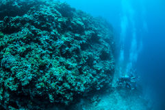 Dykare och menoväggen i Gili, Lombok, Nusa Tenggara Barat, Indonesien undervattens- foto arkivfoto