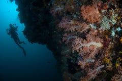 Dykare och olika Coral Reef i Indonesien arkivfoton