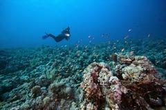 Dykare och tropisk rev arkivfoto